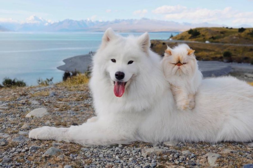 A dog's smile and a cat's frown turn them into two social media stars A dog and a cat from New Zealand have become social media stars thanks to their participation in the white color of their fur, their unconventional friendship, and their great contrast between Casper's smile and Romeo's spontaneous frown!