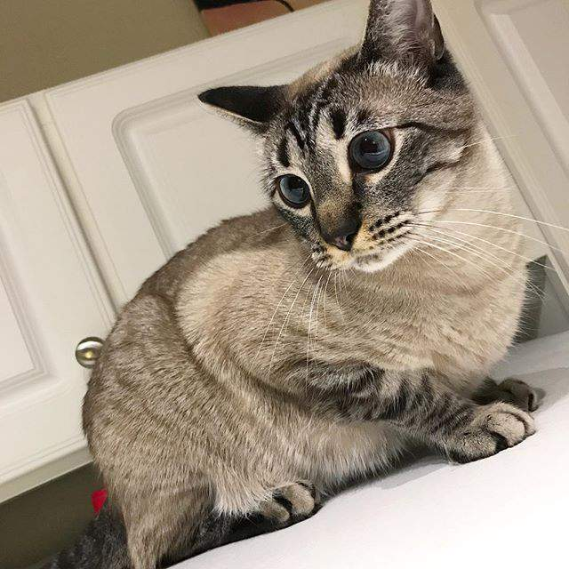 100 Gambar Kucing Imut-Imut Dan Lucu Untuk Wallpaper Hp