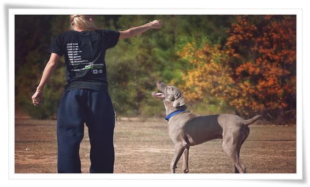 Weimaraner Dog Training