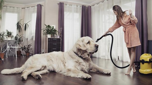 Los asombrosos 16 perros más grandes del mundo