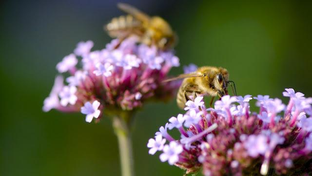 """Científicos publican una """"advertencia a la humanidad"""" sobre la posible desaparición de los insectos que sería catastrófica"""
