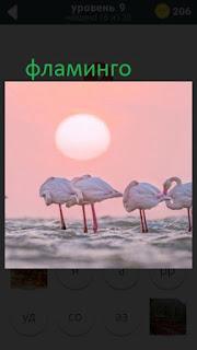 470 слов. все просто фламинго стоят в воде 9 уровень