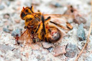 azuqueca concurso apicola - Las abejas, un eslabón fundamental para el medio ambiente - El Apicultor Español: Actitud y Aptitud Apícola