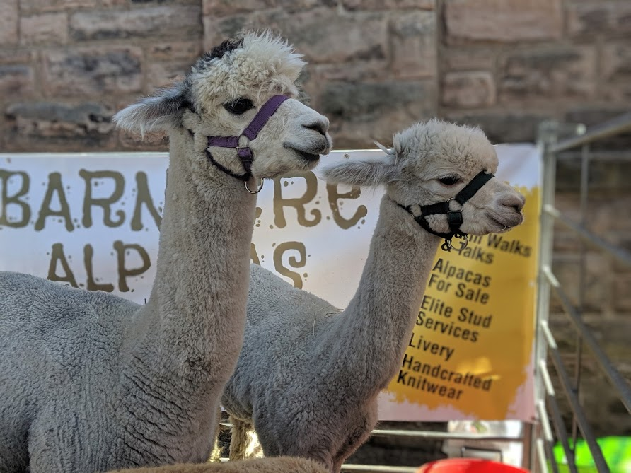 30+ North East Farms & Animal Attractions