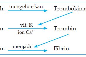 3 Jenis-jenis Kekurangan Fibrinogen