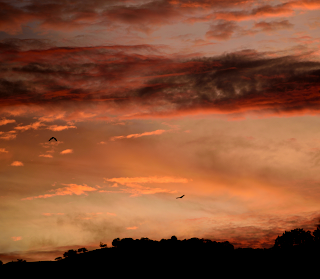 colorful sunset with flying vultures