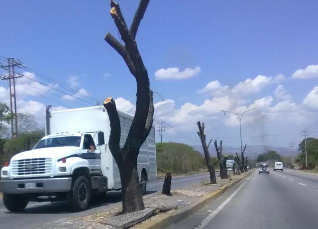 UNT Lara consigna documento ante la Fiscalía por tala de 120 árboles en El Cují