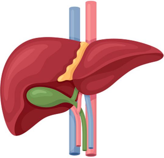 Penyakit Hernia : Pengertian, Tanda dan Gejalan, Penyebab, Dan Faktor Risiko Pengertian Hernia Hernia terjadi ketika bagian dari organ atau jaringan (seperti bagian dari usus) menonjol ke daerah-daerah yang tidak biasa. Bagian organ tersebut muncul melalui bukaan atau area lemah dalam dinding otot, sehingga muncul tonjolan atau benjolan. Jika hernia hanya muncul karena tekanan atau regangan, maka kondisi tersebut dikenal dengan hernia yang dapat direduksi (reducible hernia) dan tidak berbahaya.   Jaringan yang terjebak dalam bukaan atau ruang dan tidak dapat kembali lagi dinamakan hernia yang tertahan (incarcerated hernia) dan merupakan masalahan serius. Hernia yang paling berbahaya adalah strangulasi. Dalam hal ini, jaringan yang terjebak kehilangan suplai darah dan mati.  Tanda dan Gejala Hernia Tanda-tanda dan gejala yang muncul bergantung pada jenis hernia. Gejala hernia inguinal dan hernia pusar adalah munculnya pembengkakan tanpa rasa sakit, yang mungkin akan hilang dengan sendirinya. Gejala yang paling jelas yaitu jika menangis, mengejan, batuk, atau berdiri. Hernia inguinalis pada laki-laki dapat membuat skrotum (kantung buah zakar) menjadi besar. Pada anak perempuan, labia (jaringan di sekitar vagina) bisa membengkak.  Hernia internal mungkin tidak memiliki gejala atau dapat menyebabkan muntah dan mulas. Hernia tertahan menyebabkan gumpalan daging yang empuk namun padat, nyeri, muntah, sembelit, dan rasa terganggu. Hernia strangulasi menyebabkan demam dan adanya area yang bengkak, kemerahan, meradang, dan sangat menyakitkan.  Penyebab Hernia Hernia inguinalis tidak langsung, muncul pada saat lahir, disebabkan oleh kesalahan selama perkembangan janin. Hernia inguninalis langsung terbentuk setelah lahit. Hernia umbilikalis terjadi ketikan cincin pusar tidak menutup dengan benar. Dalam hernia lainnya, membran, otot dinding, atau struktur lainnya tidak terbentuk dengan benar atau terluka, sehingga mereka perlahan-lahan melemah.  Faktor Risiko Hernia Sejumlah fa