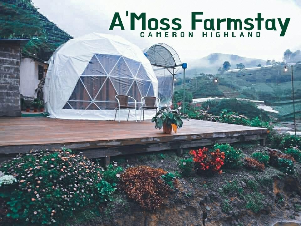 Hotel Tour #3 : A'Moss Farmstay Cameron Highland | Igloo-like Glamping Experience