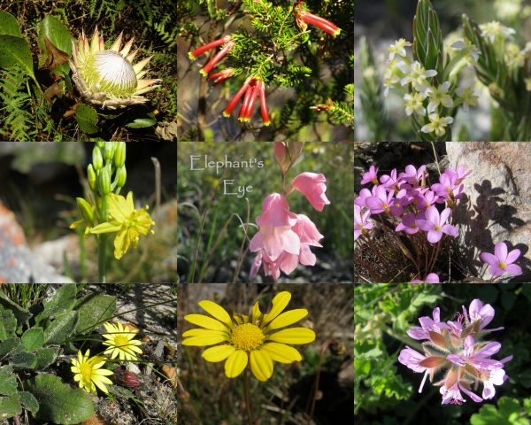 April flowers at Silvermine