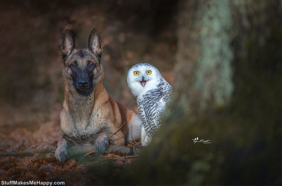 Animal Friendship Between A Dog and An Owl