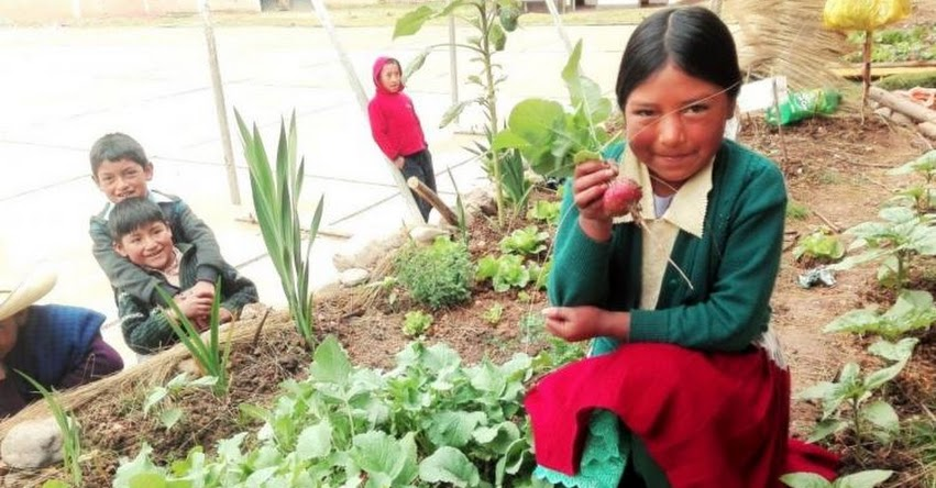 QALI WARMA: Implementan huertos escolares en Junín para sembrar hortalizas orgánicas - www.qaliwarma.gob.pe