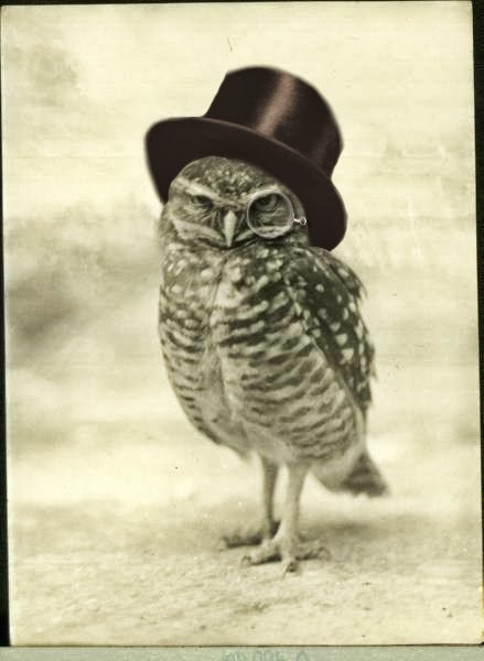 vintage owl all about owl