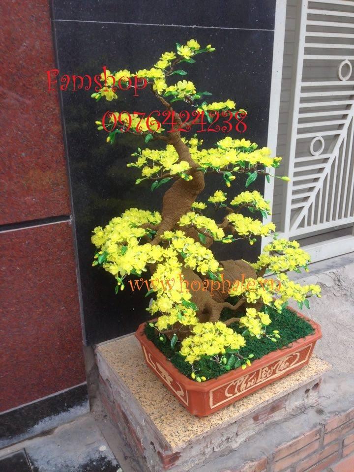 Goc bonsai mai dao tai Cau Dat