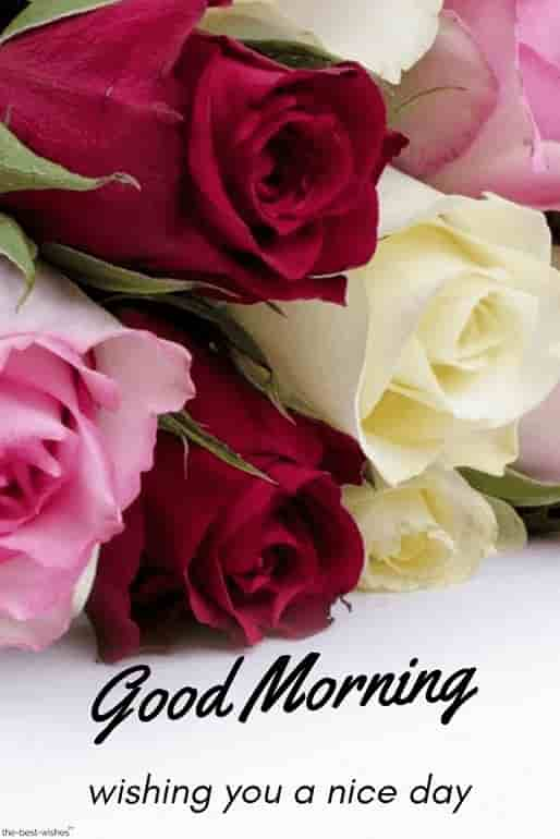 good morning wishing you with a nice day with red pink yellow flowers