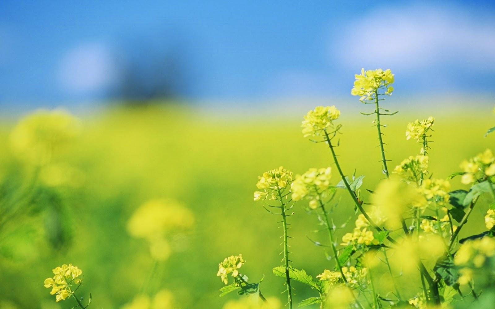 Kleine gele bloemen in de zomer