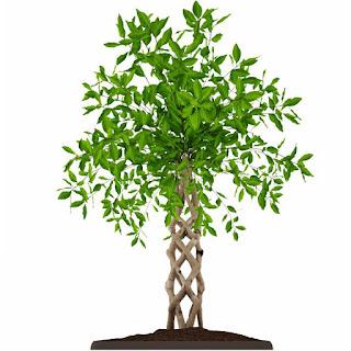 3dsMax高精度植物盆栽3D模型下載