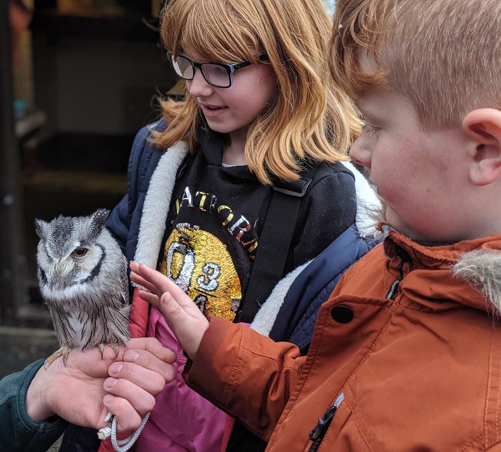 Meeting Owls at Kielder Winter Wonderland
