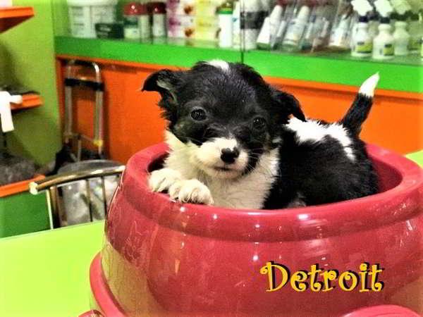 cachorros de tamaño pequeño 1