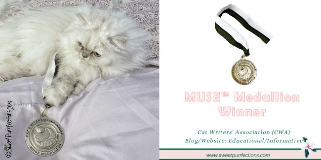 Persian cat, Truffle, with Muse Medallion on bed graphic