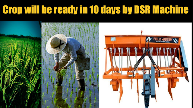 Crop will be ready 10 days before transplanting paddy with DSR machine