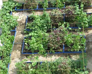 Thi c ng v n ng v n tr n t ng v n rau s ch for Terrace vegetable garden kerala