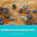 Klasifikasi Jamur Roti dan Morfologi Jamur Roti