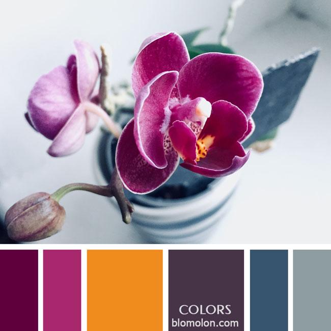 variedad_en_color_paletas_de_colores_14