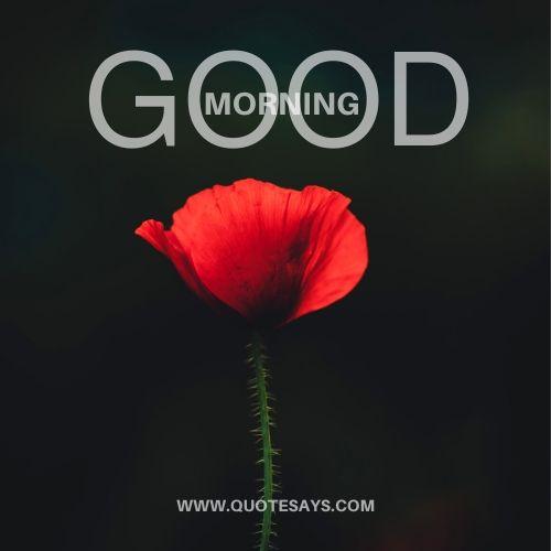 Good morning flower red