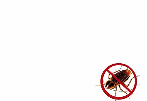 Dịch vụ phun thuốc diệt muỗi tại Đà Lạt