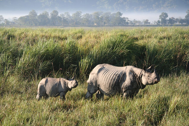 Kaziranga_National_Park_wallpapers