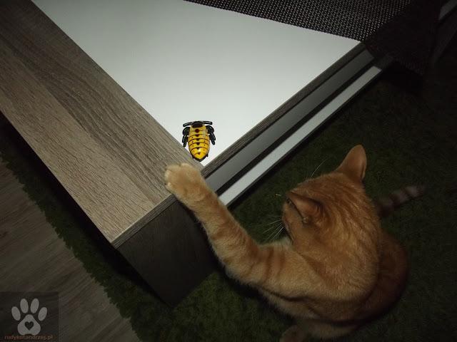 rudy kot andrzej