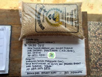 Benih padi yang dibeli   GEDIUN Sintang, Kalbar.   (Sebelum packing karung).
