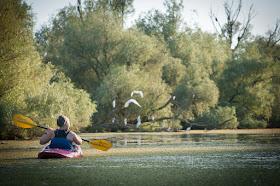 Chasing cormorants on Chilia Branch, Romania