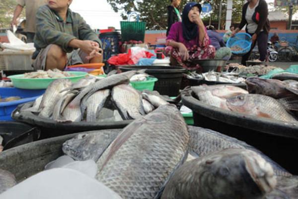 Jenis Ikan Air Tawar Konsumsi Beserta Harganya
