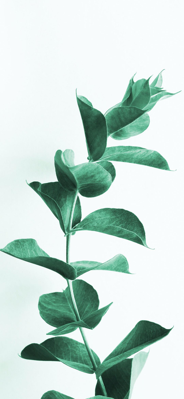 خلفية نبتة بأوراق كثيفة خضراء اللون