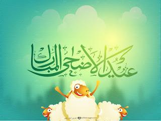 صور كباش العيد