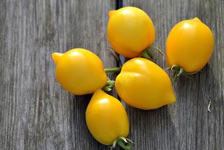 http://tomatprat.blogspot.no/2016/02/lemon-tree-som-en-sitron.html