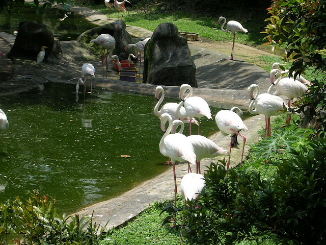 Bali Bird Park for things to do in Bali3