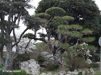 Mount Godaisan, Kochi, Shikoku, Japan