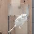 Η Pfizer αρνείται να σταματήσει πείραμα σε ζώα...