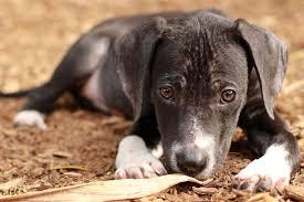 cão desnutrido como devo alimenta-lo