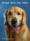 Unique male dog names   200+ unique dog names male