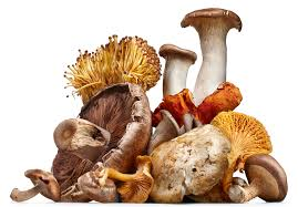 National Mushroom Day Wishes Images download