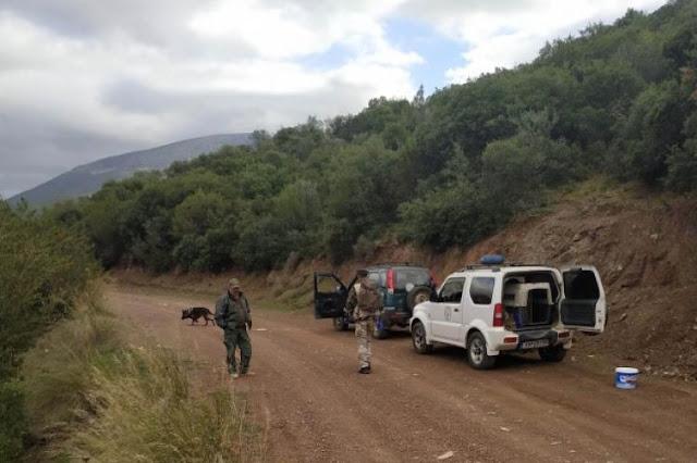 Αργολίδα: Εκπαιδευμένος σκύλος εντόπισε 25 φόλες στην περιοχή της Ερμιονίδας