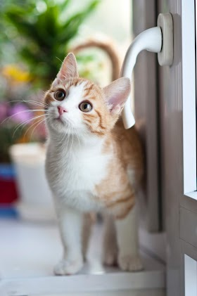 Why do cats like to look out of the window?