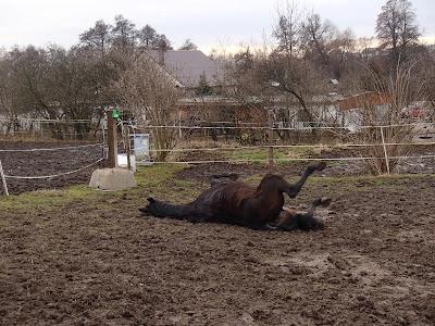 konie, jazda konna, czyszczenie koni, koń się tarza, konie i błoto, pensjonat dla koni w Krakowie