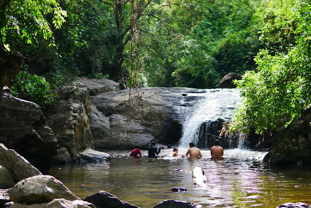 ป่าละอู เป็นที่นิยมในหมู่นักท่องเที่ยวที่ชอบไกล้ชิดธรรมชาติ การเดินป่าเล่นน้ำตก เดินชมนกและผีเสื้อ