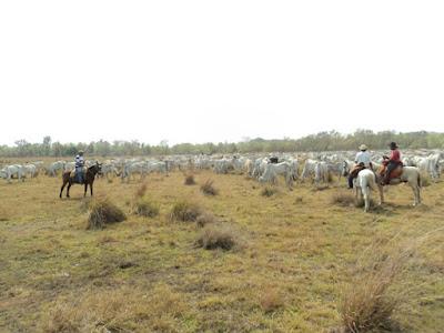 vende fazendas no pantanal