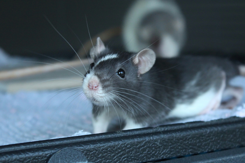 Sklepy dla zaszczurzonych